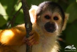 Pampas-Bolivia-Squirell-Monkey