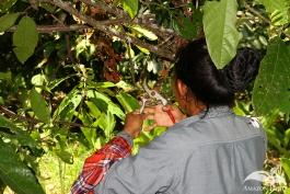 Practica-del-Campo-Amazonia-13