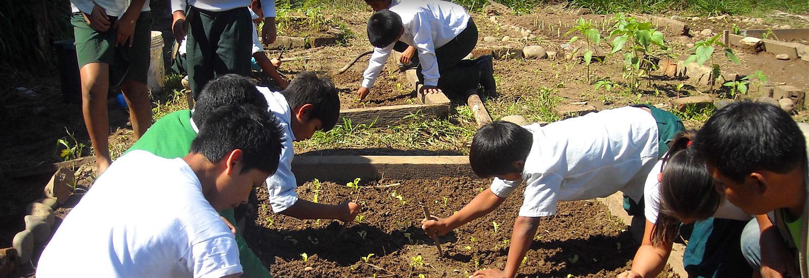 Schoolgardens Bolivia